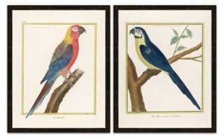 Parrots Diptych - One Kings Lane