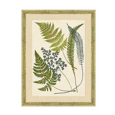 Graceful Fern Art - Print 4 - Ballard Designs