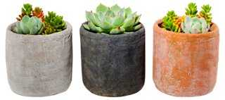 Succulent Arrangement Trio Kit - One Kings Lane