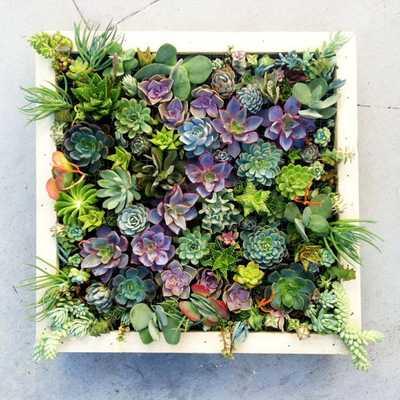 Vertical Succulent Garden - Etsy