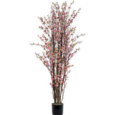 Blossom Tree in Pot - Wayfair