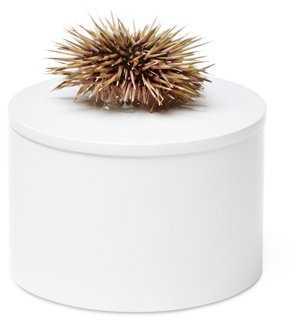 Round White Box w/ Sea Urchin - One Kings Lane