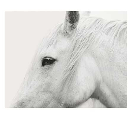 WHITE HORSE FRAMED PRINT BY JENNIFER MEYERS - Pottery Barn