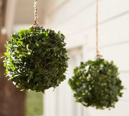 Live Ivy Kissing Ball - Pottery Barn