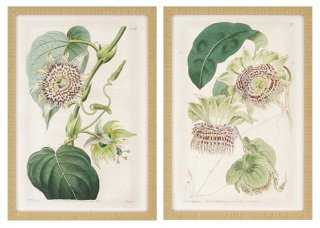 Antique Flowers (Set of 2) - One Kings Lane