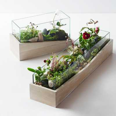 Roar + Rabbit Angled Wood Terrariums- Medium - West Elm