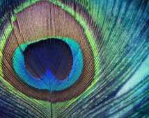 Peacock Feather FRAMED ART PRINT - Society6
