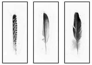 Feathers Triptych - Set of 3 - One Kings Lane
