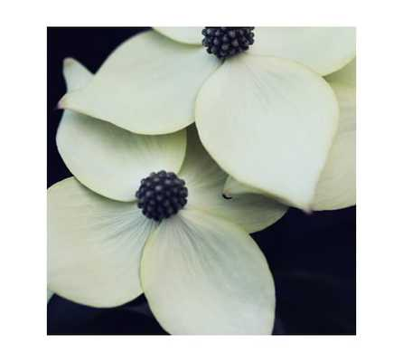 Dogwood by Alicia Bock - Framed - Pottery Barn