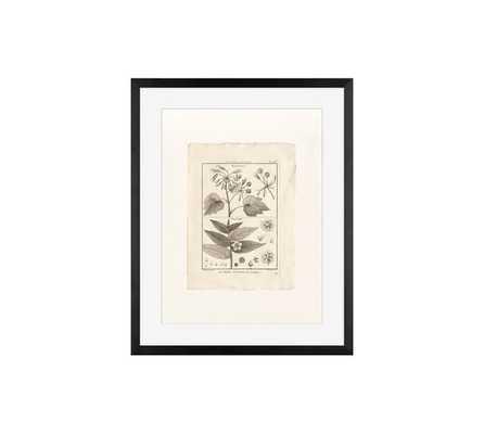 Botanical Plate 468 Framed Print - Pottery Barn