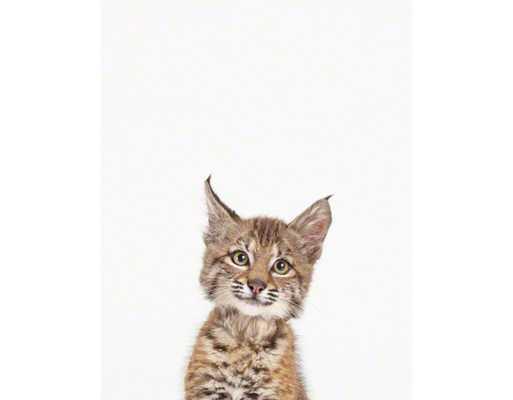 """BABY BOBCAT LITTLE DARLING/11"""" x 17""""-Framed - shop.com"""