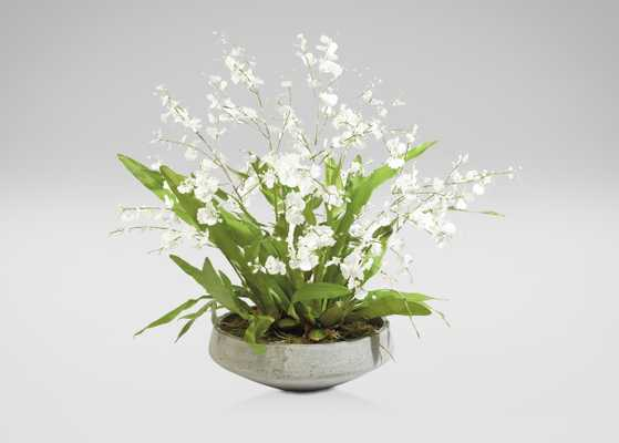 White Oncidiums in Aged Bow - Ethan Allen