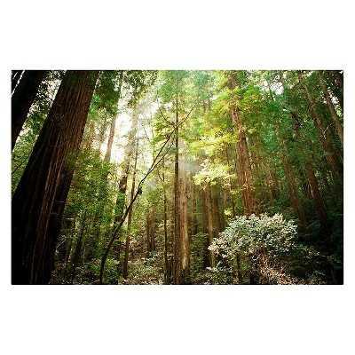 "Ariane Moshayedi Muir Woods Canvas Art - Green-32""x22'-Unframed - Target"
