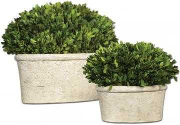 PRESERVED BOXWOOD OVAL TOPIARIES - SET OF 2 - Home Decorators