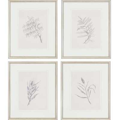 Foliage by Mendez 4 Piece Framed Graphic Art Set by Paragon - Wayfair