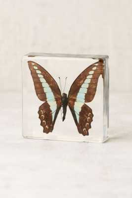 Butterfly Decor Sculpture - Blue - Urban Outfitters