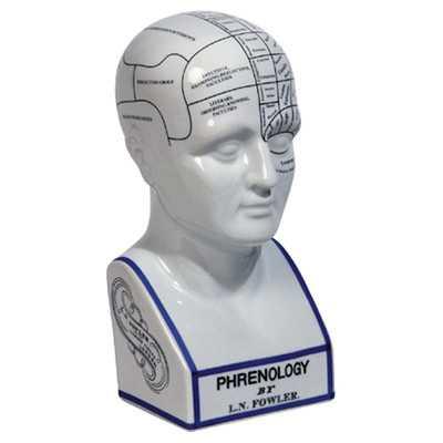 Phrenology Head Bust - Wayfair