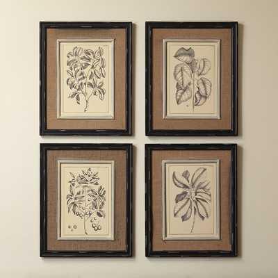 "Botanic Wall Art (Set of 4) - 21"" H x 17"" W - brown frame - Wayfair"