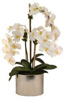 "34"" Phalaenopsis in Planter, Faux - One Kings Lane"