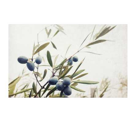 Olive Branches by Lupen Grainne - Pottery Barn
