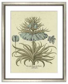 Basilius Besler, Botanical I 1613 - One Kings Lane