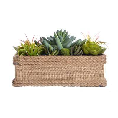 Succulents in Hemp Rope Container - Wayfair