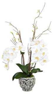 """35"""" Phal Orchid Arrangement, Faux - One Kings Lane"""