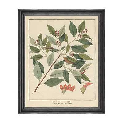 Heines Botanical Framed Print - Print VII - Ballard Designs