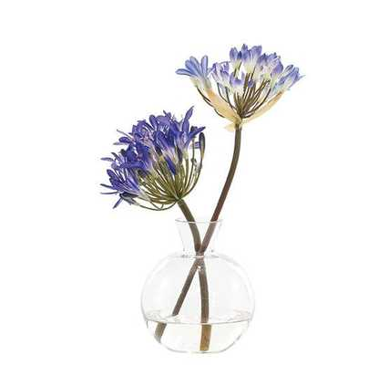 Agapanthus Blue Glass Decanter - Domino