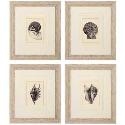 """Shell 4 Piece Framed Graphic Art Set - 23"""" H x 20"""" W x 1"""" D - Wayfair"""