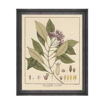 "Heines Botanical Framed Print - Print II - 22""H X 18""W X 3/4""D - Framed - Ballard Designs"
