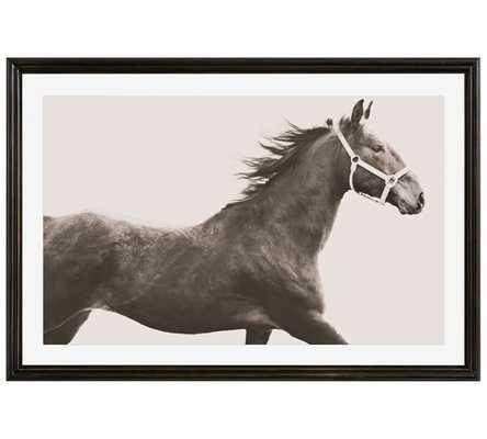 Vintage Horse - 42x28, Framed - Pottery Barn