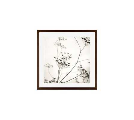 Nature's Drawing Framed Print - Pottery Barn
