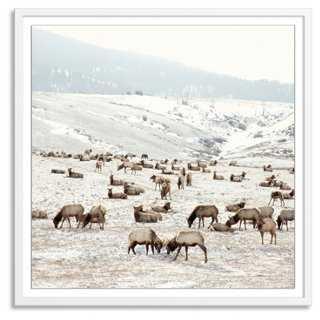 """Christine Flynn, Elk Battle - 40"""" x 40"""" - Framed - One Kings Lane"""