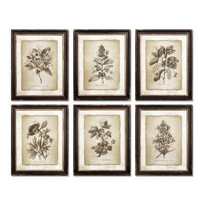"""Vintage Floral 6 Piece Framed Graphic Art Set - 20.5""""x16.25"""" - Framed - Wayfair"""