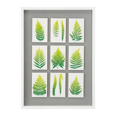 "OLUNDA-Picture-ferns-28 ¼x20 ½ ""-Framed - Ikea"