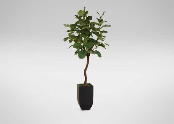 Fiddle Leaf Fig Tree - Tapered Urn - Ethan Allen