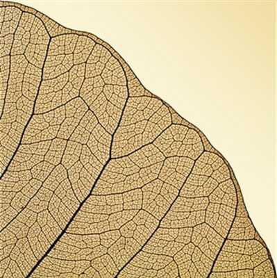 Veiny brown leaf - 40x40 - unframed - Photos.com by Getty Images