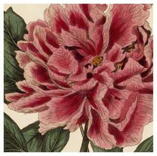 Pink Peony 43, 1810 - One Kings Lane