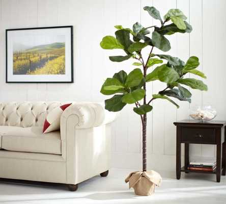 FAUX POTTED FIDDLE LEAF TREE - Pottery Barn