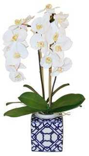 "26"" Phalaenopsis Arrangment, Faux - One Kings Lane"