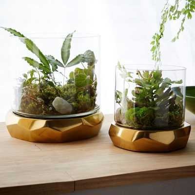 Roar + Rabbit Freeform Terrariums, Small - West Elm