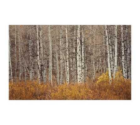 """ASPEN TREES FRAMED PRINT - 42"""" x 28"""" - Pottery Barn"""