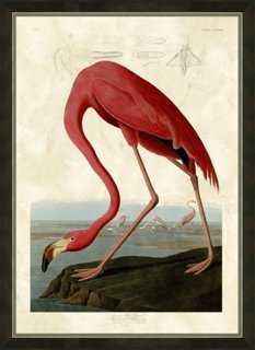 Audubon, Flamingo - One Kings Lane