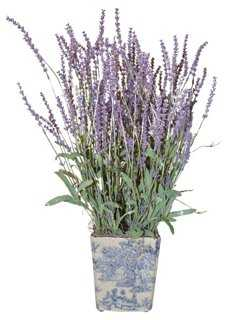 Lavender in Planter - One Kings Lane