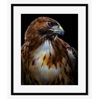 """Red-Tailed Hawk - Small (1"""" Mat): 26"""" x 31""""h - Framed - West Elm"""