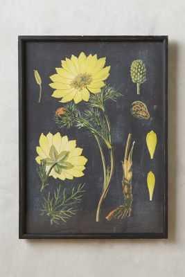Botanical Specimen Print - Anthropologie