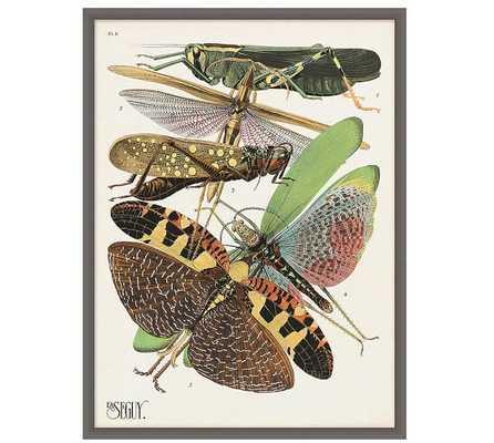 """Seguy Grasshoppers Print - 23.75"""" x 31.75"""" - Framed - Pottery Barn"""