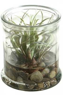 SUCCULENTS IN JAR II/EASTER GRASS - Home Decorators