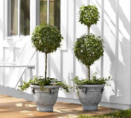 Live Ivy Classic Topiary - Pottery Barn